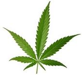 Altria Marijuana